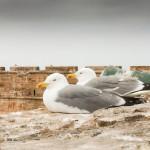 Maroc_Essaouira-3